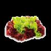 Salades rouge vert